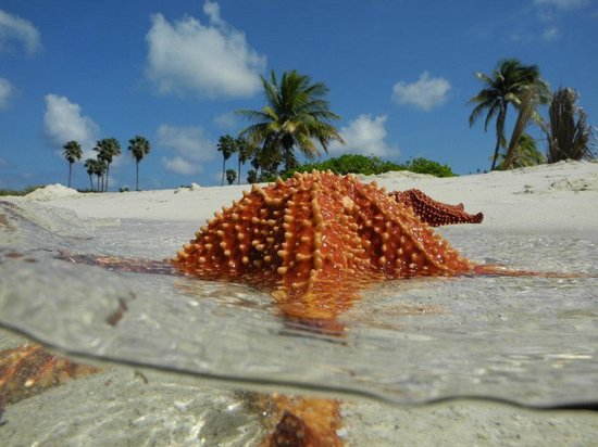 starfish beach - picture of grand cayman eco divers  george town