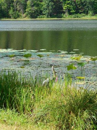 Innisfree Gardens: Local Wildlife