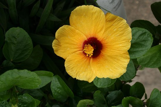 Silberpagode: Blumen in garden