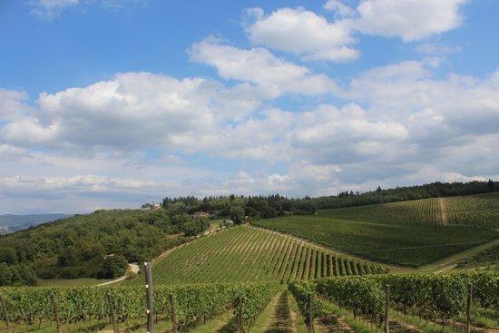 I Bike Tuscany: Vineyards