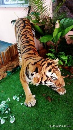 Kuala Gandah Elephant Sanctuary: the display stuffed tiger