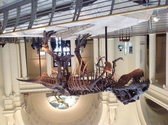 The Field Museum : Sue - Tyrannosaurus Rex!