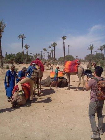 Rak Adventure : Camel stop