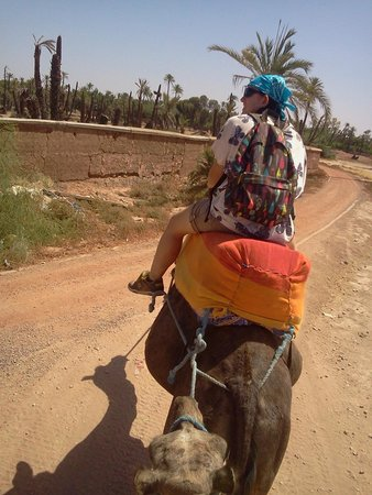 Rak Adventure - Day Tours : Camels in the palm grove