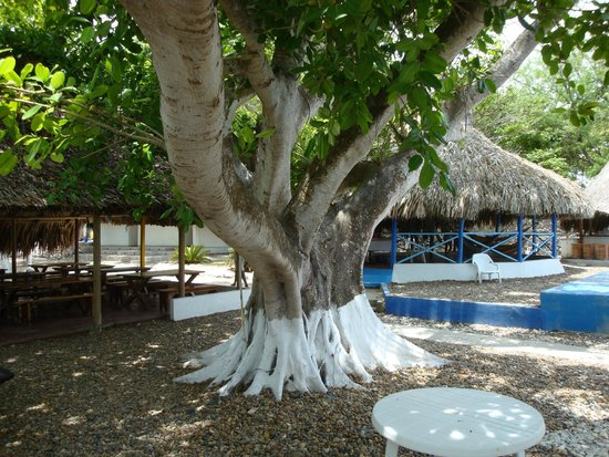 Tours in Rosario islands : shade tree