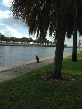 La Quinta Inn & Suites St. Petersburg Northeast: Walking along St. Petersburg Marina, about 10 minutes from hotel.