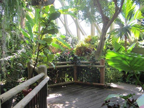 Indoor jungle picture of denver botanic gardens for Indoor botanical gardens