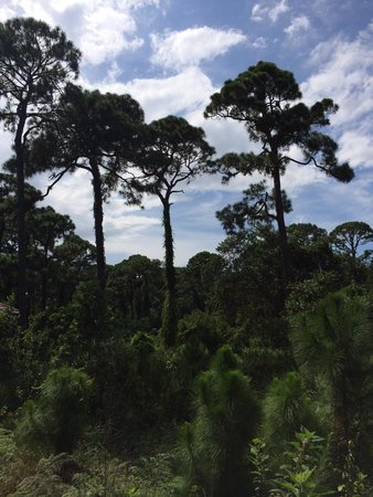 Tall Cypress Natural Area