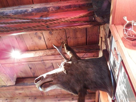 Cappy's Chowder House : Moose sighting in Cappy's!