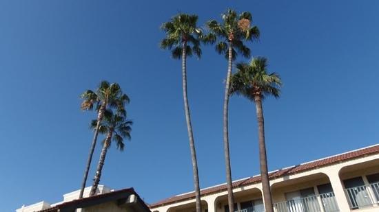 Vagabond Inn - Glendale: love the palms