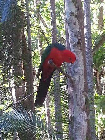 Narrows Escape Rainforest Retreat: Evening Visitor