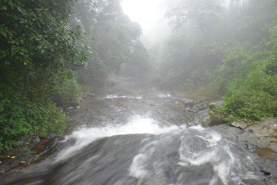 Gavi Forest : Forest stream on Eco trek