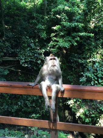 Plangon Monkey Forest and Tombs