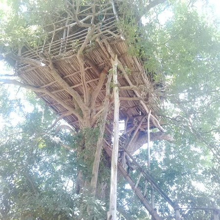 Back of Beyond - Dehigaha Ela: treetop house