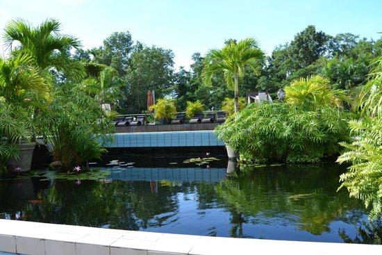 Royal Torarica: fiske dam neden for poolen