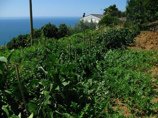 Agriturismo Gallerani : Orto con vista