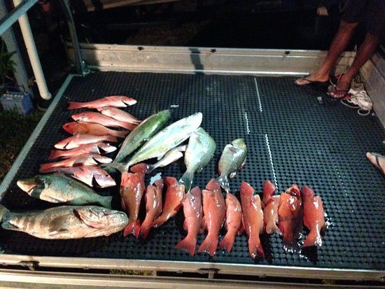 Mission Beach Charters: Our Haul!