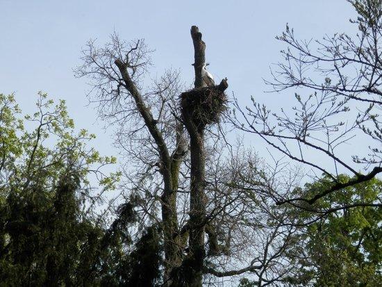 Goito, Italia: cicogna nel nido