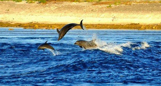 Hotel Maitai Rangiroa: Delfini a Passe de Tiputa
