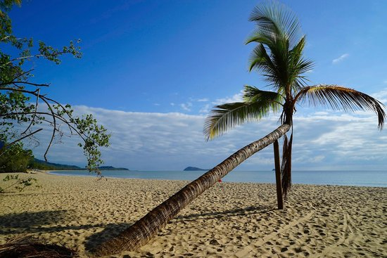 Kewarra Beach Resort & Spa: The Palm tree on the beach at the back of resort