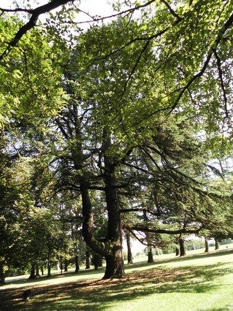 Magnani-Rocca Foundation : immenso cedro del Libano