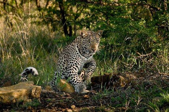 Kalepa Safaris
