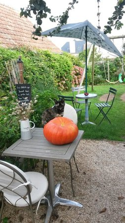 L'Hermine Blanche : Terrasse côté jardins