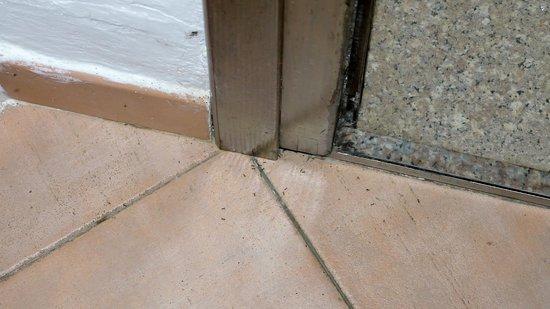 Tre Monti Hotel : Ameisen im Zimmer