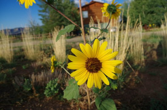 Flagstone Meadows Ranch Bed and Breakfast: Lots of area to explore - there is even a walking trail!
