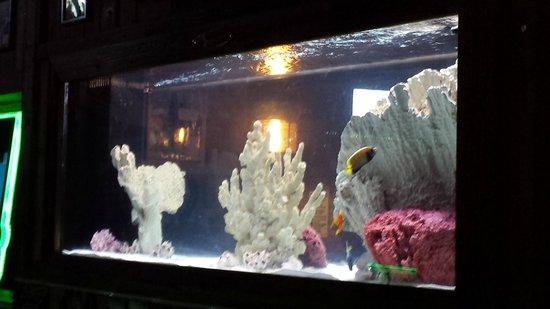 Flanigan's Seafood Bar and Grill: aquario
