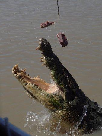 Jumping Crocodile Cruises: Got myself a bit of Buffalo!