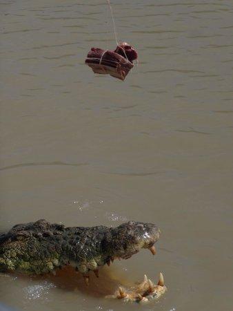 Jumping Crocodile Cruises: Well Hello...