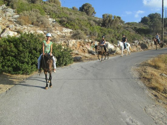 Amarillis Stable : riding back up the hill with a beautiful view