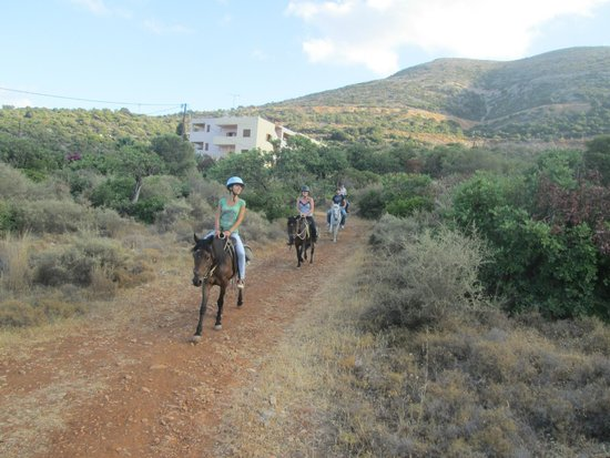 Amarillis Stable : on our way back to the horse base
