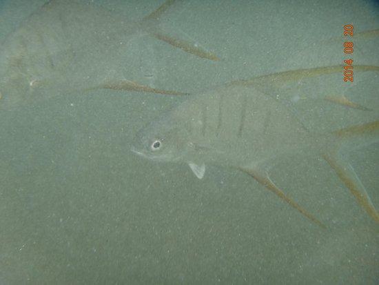 Hotel Riu Palace Costa Rica: Fishes!!!!