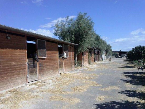 Il Giardino del Sole: cavalli