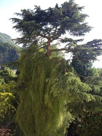 Parkhotel Laurin: Baumbestand im Hotelgarten
