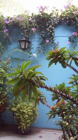 Casa de Las Flores: Garden View