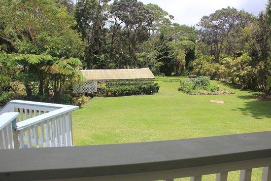 Aloha Junction Bed and Breakfast: Backyard