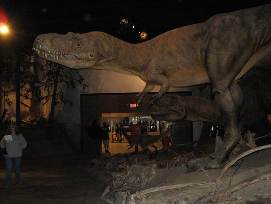 Royal Tyrrell Museum: Looking back at the enterance