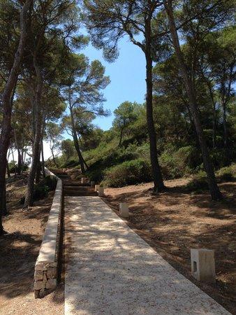 Hotel Can Simoneta: Camino en el bosquecillo