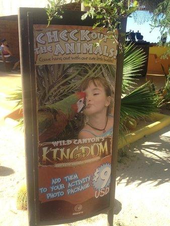 Wild Canyon Adventures: poster