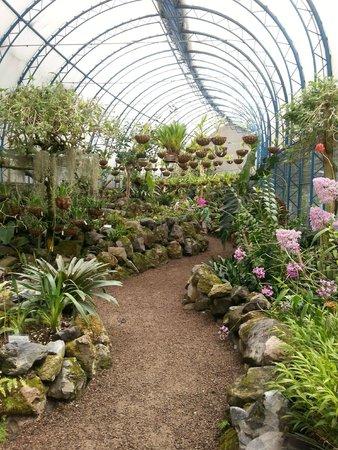 Uno de los invernaderos con orquideas picture of jardin for Jardines de orquideas