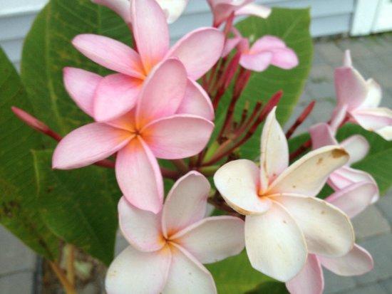 Cheeca Lodge & Spa: Flowers at Cheeca