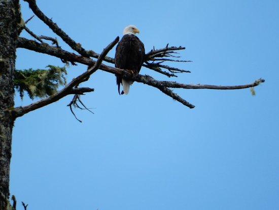 Southeast Exposure Outdoor Adventure Center : Eagle