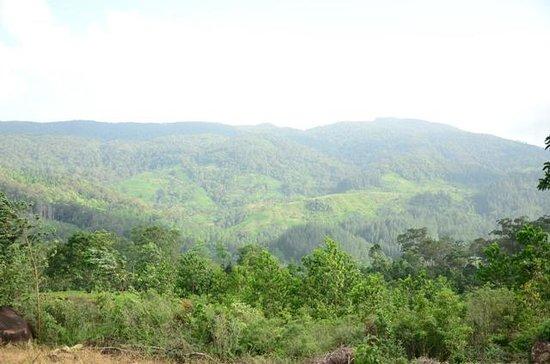 Sinharaja Forest Reserve : Milinduthalawa
