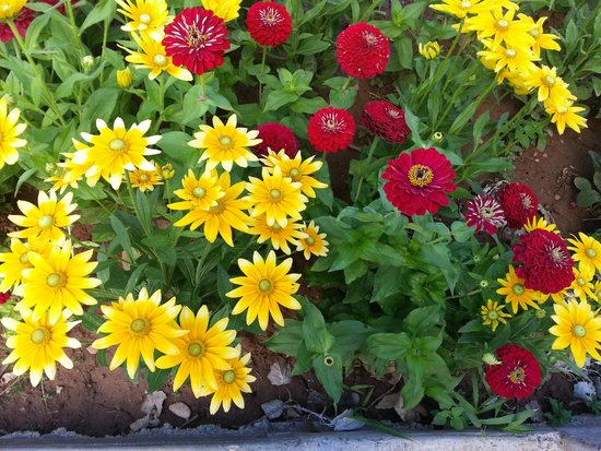 Just a sample of the hot springs state park flowers picture of hot just a sample of the hot springs state park flowers mightylinksfo