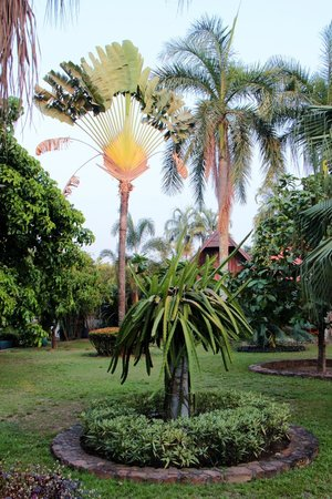 Palm Garden Lodge: garden