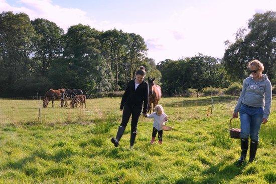 Aberhyddnant Farm Cottages: horses