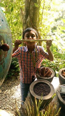 Tropical Spice Garden: Fragrant lemongrass